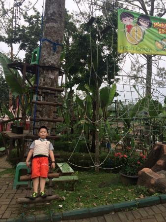 Fresh Green Trawas : fresh, green, trawas, Where, Heroes, Durian.., Picture, Fresh, Green,, Trawas, Tripadvisor
