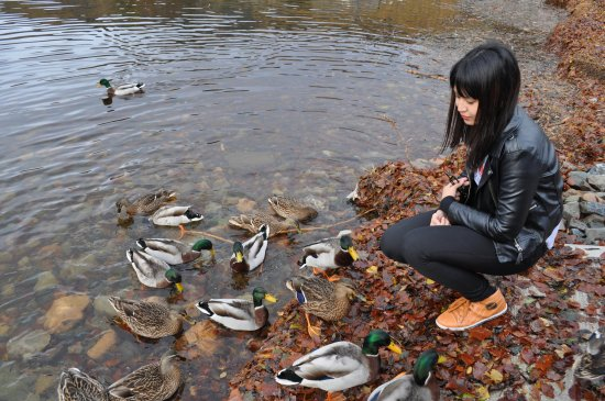feeding the wild ducks