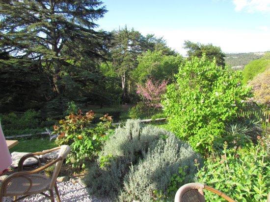 Von Der Terrasse Zu Garten Und Zeder Photo De L'Auberge Du Cèdre