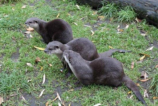 Image result for willowbank wildlife reserve