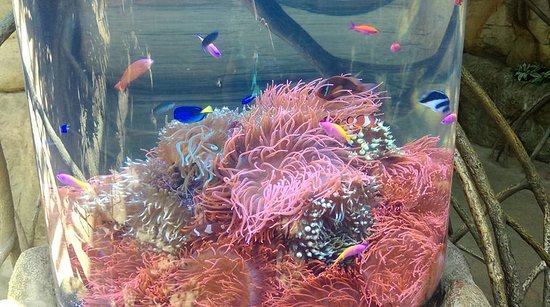 anemone tank picture of