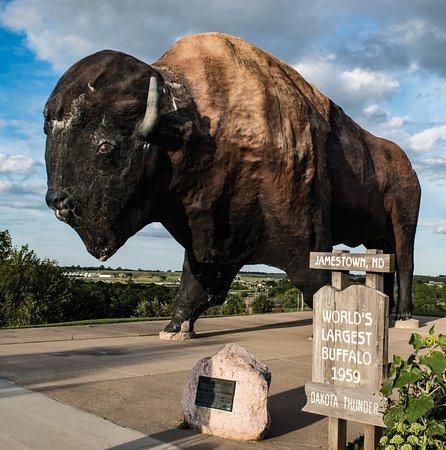 world s biggest bison