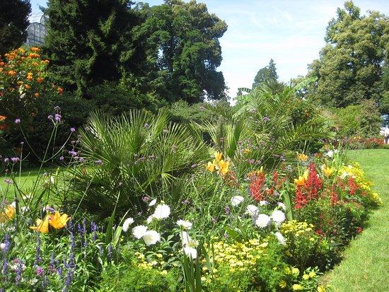wunderschne Blumeninsel Mainau  Bild von Schwedenschenke