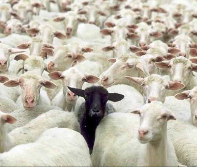 Mavro Provato Black Sheep