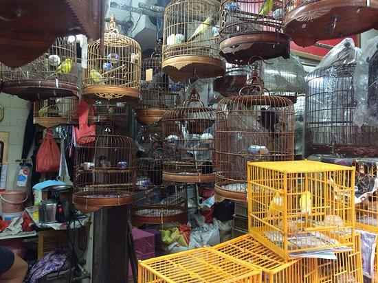 Birds. - 香港園圃街雀鳥花園的圖片 - TripAdvisor
