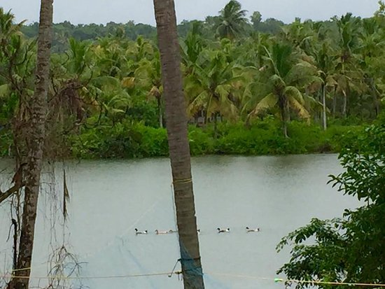 Ducks On The Kallada River Picture Of Lake N River An Skb