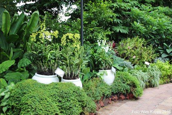 Singapore Botanische Tuinen Botanische Tuin Singapore