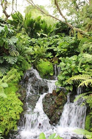 Singapore Botanic Gardens Botanische Tuin Singapore