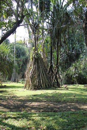 Hotel Novotel Bogor Golf Resort And Convention Center Botanische Tuin