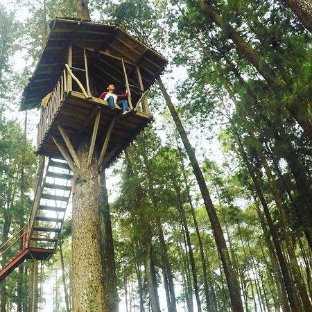 Tarif Rumah Pohon Cikole Lembang Bandung  Gambar C