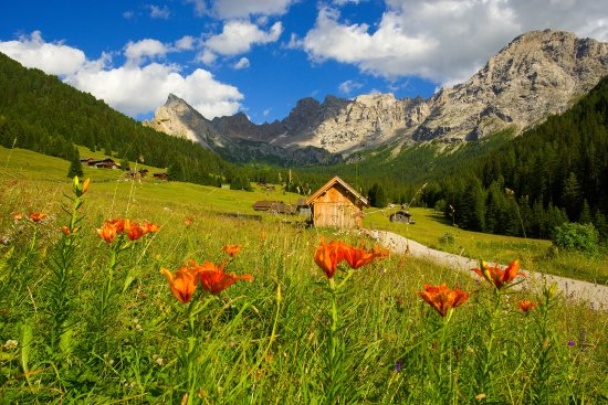 Paesaggi estate Val di Fassa  Val San Nicol  Photo de Fassa Valley Province of Trento