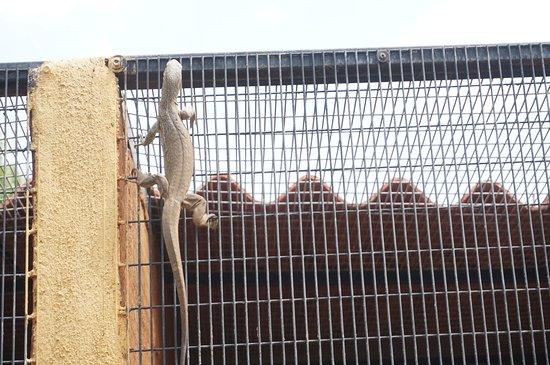 Birds Research Center & Resort (Hambantota) - 2020 What to Know Before You Go (with Photos) - Tripadvisor