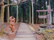濟州寺水自然休養林 照片