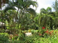 Garden view - Picture of Orchid World & Tropical Flower ...