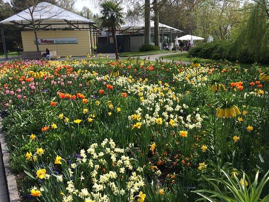 Blumen  Bild von Insel Mainau Konstanz  TripAdvisor