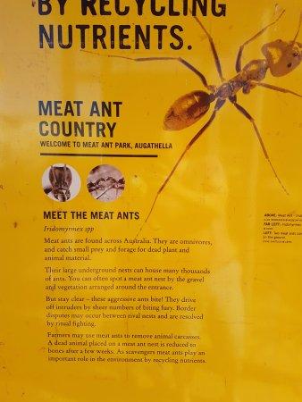 Augathella Meat Ant Park Giant Sculpture Facts