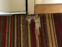 Torn carpet - Picture of Comfort Inn Rocky Mount, Rocky ...