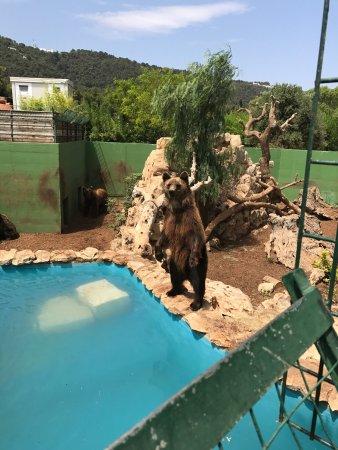 Zoo Safari (Fasano): tutto quello che c'è da sapere - TripAdvisor