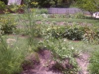 Kitchen Garden Terrace - Picture of Governor's Palace ...