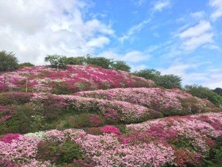 「愛媛県大洲市田口 冨士山」の画像検索結果