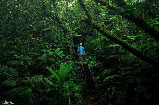 Coco Tours Honduras Tela  bon  savoir pour votre visite en 2019  TripAdvisor