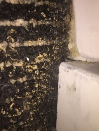 yellow mold growing on carpet by shower