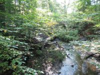 River woods in the Botanical Garden itself - Picture of ...