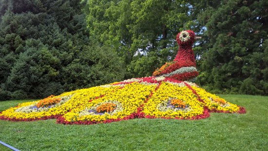 Blumen Senden Konstanz