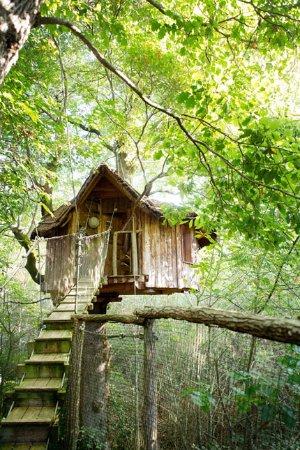 La Cabane Au Fond Des Bois : cabane, Cabane, Arbres,, Marcheroy, Picture, Cabanes, Bois-Charmant,, Nouillers, Tripadvisor
