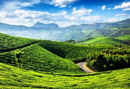 Thekkady in Kerala
