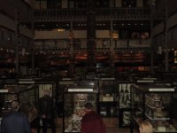 Subdued lighting - Picture of Pitt Rivers Museum, Oxford ...