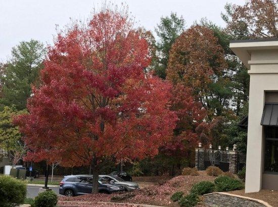 fall foliage still in