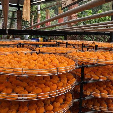 (新埔, 新竹縣)金漢柿餅 - 旅遊景點評論 - Tripadvisor