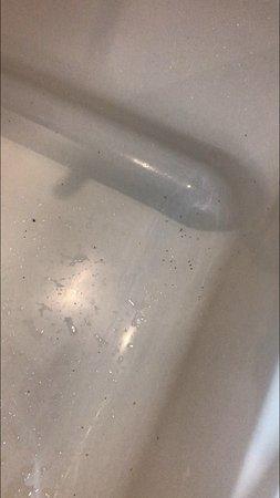 ants in the bathtub