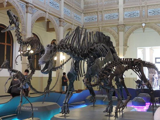 Esquletos de Dinos: fotografía de Museo Nacional de Historia ...