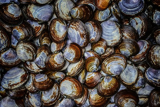 The whale trail's mission is to inspire appreciation and stewardship of whales and our marine environment. Featuring Ocean Wise Local Seafood Picture Of 10 Acres Bistro Vancouver Island Tripadvisor