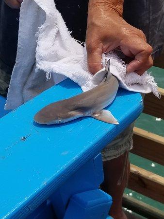 Real Baby Shark Pictures : shark, pictures, Shark, Picture, Garden, Beach,, Beach, Tripadvisor