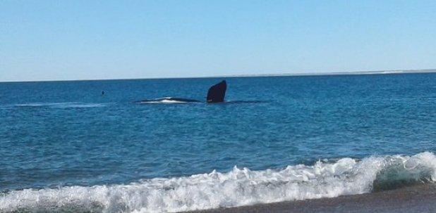 Resultado de imagen para Playa La Cantera, Puerto Madryn, Argentina