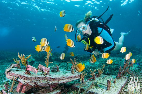 Diver Exploring A Seciton Of Artificial Reef Covered In Beautiful Marine Life Picture Of All 4 Diving Indonesia Sanur Tripadvisor