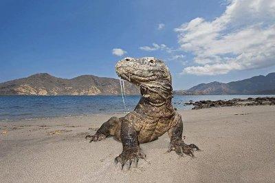 TripAdvisor | One Day Komodo Islands Adventure in East ...
