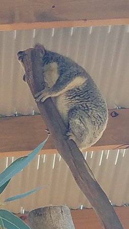 Featherdale Wildlife Park (Blacktown) - 2019 All You Need to Know BEFORE You Go (with Photos) - TripAdvisor