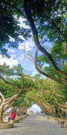 (壯圍. 宜蘭)東港榕樹公園 - 旅遊景點評論 - Tripadvisor