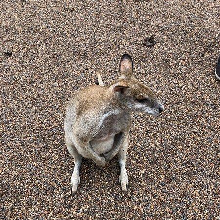 Featherdale Sydney Wildlife Park (Blacktown) - Aktuelle 2020 - Lohnt es sich? (Mit fotos)