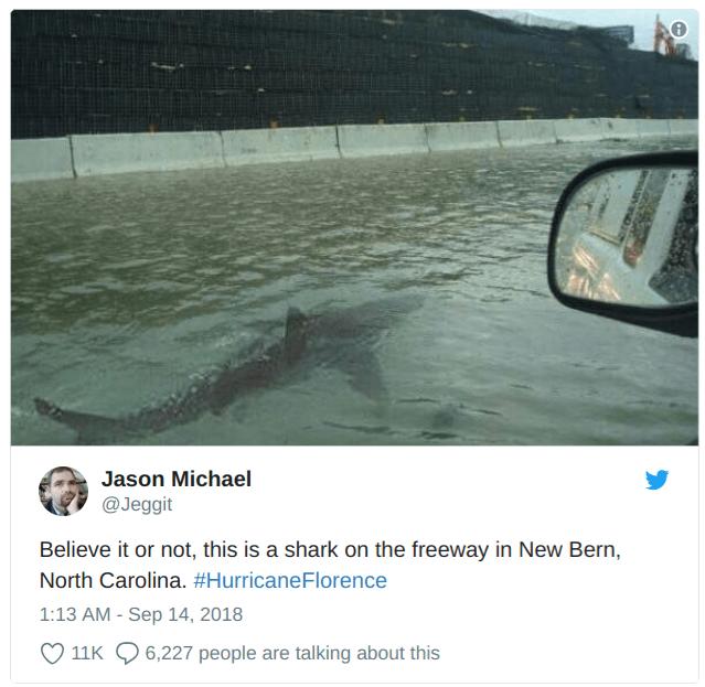 hurricane florence shark hurricane tweet