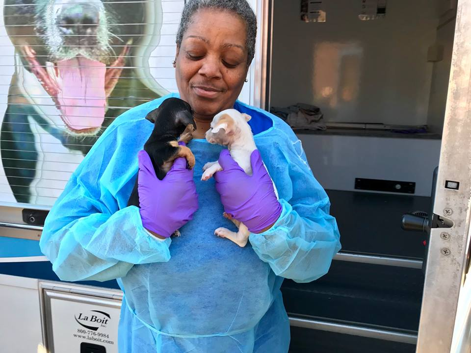 Special Delivery: Rescue Chihuahuas Have Arrived in the DMV