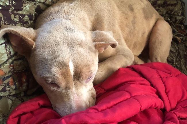 Missing dog found near beach