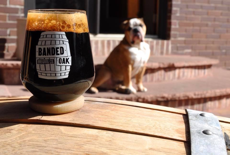 dog-friendly bars