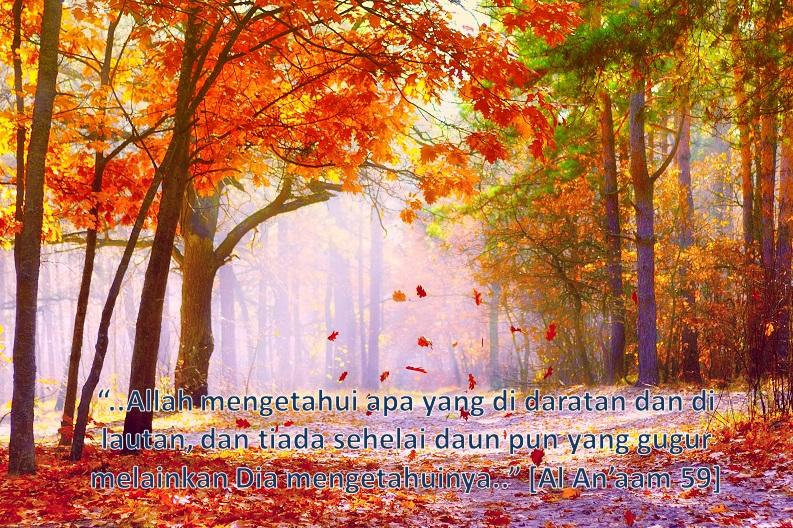 Allah Maha Melihat (Bashor)