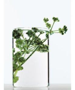 L'Oreal Paris Botanicals Strength Cure masca pentru par deteriorat