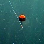 チヌ釣りやメジナ釣りのウキ釣り仕掛けにはどんな種類があるの?
